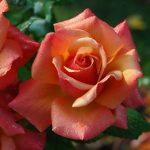 lyceehorticolelomme blog jardin photo