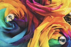 Roses colorées